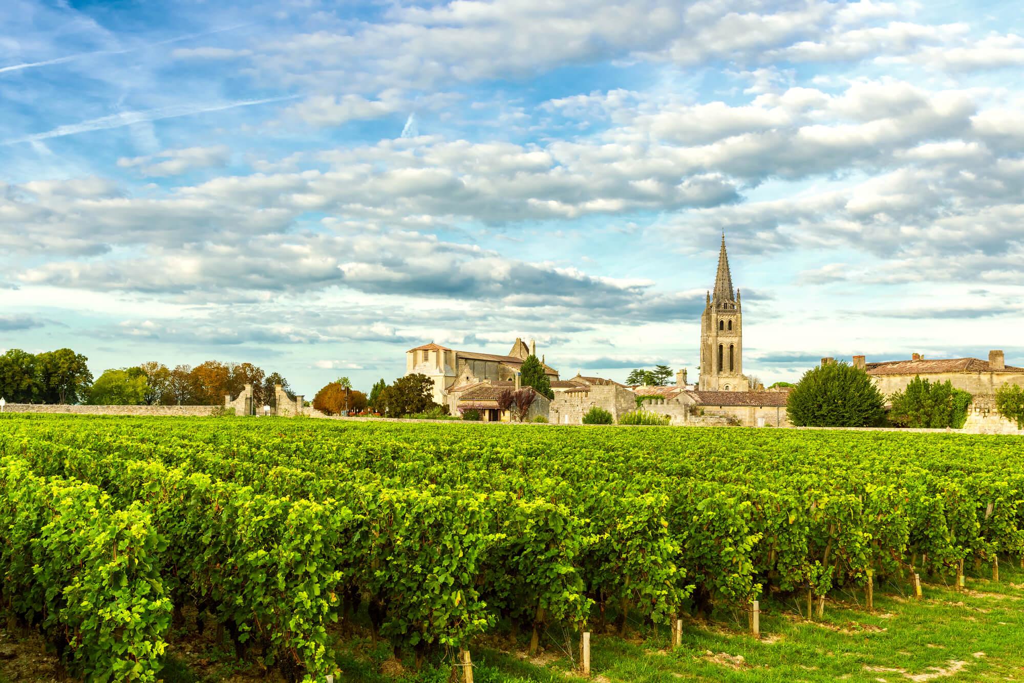 Vineyeards in Saint-Emilion