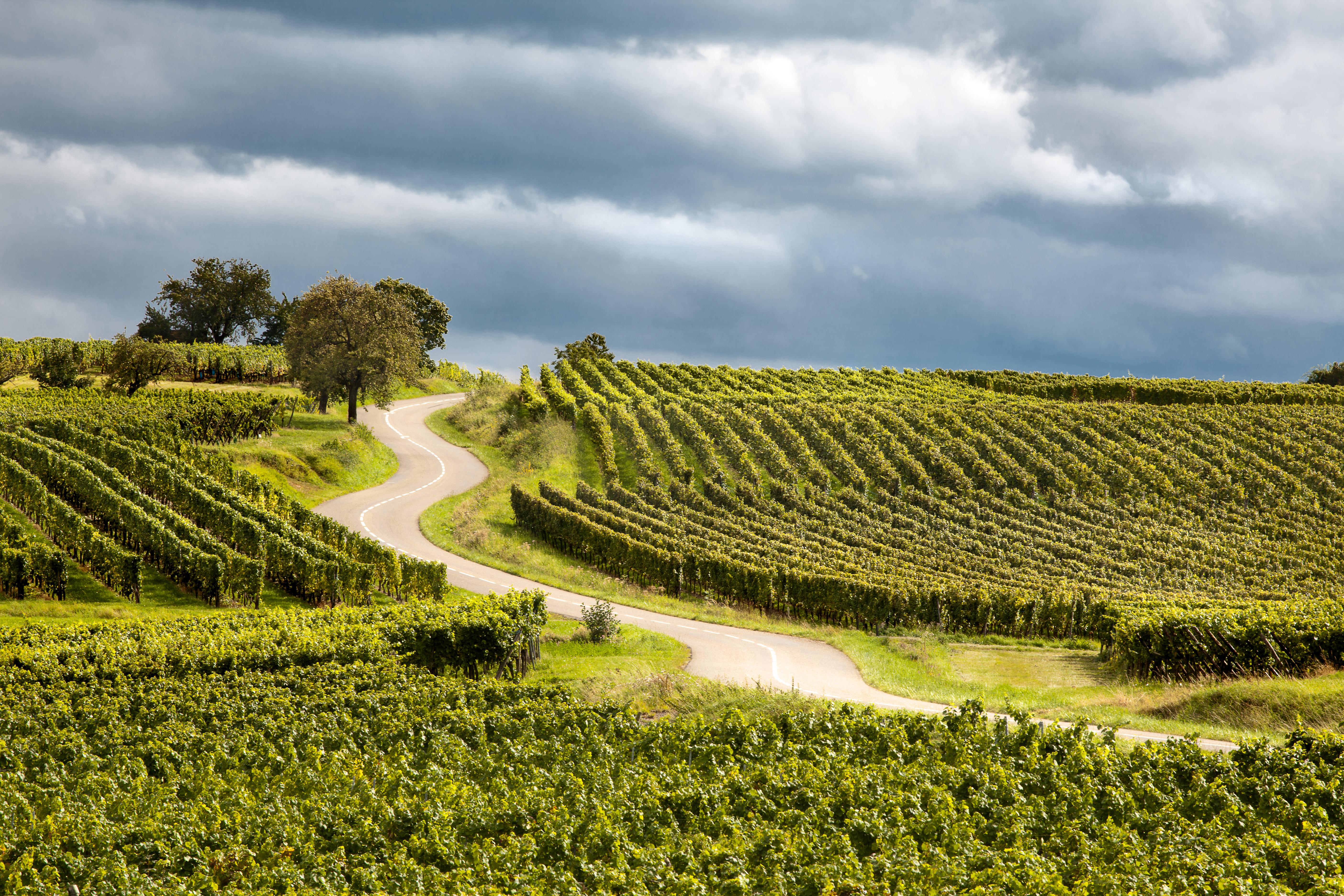 famouse Route des Vins Alsace