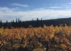 Vineyards at Chateau Mansenoble