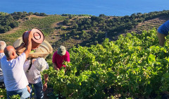 The work to harvest in the vineyards at Terres des Templiers