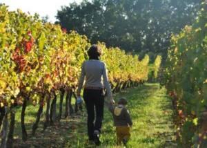 A Pleasant Walk Among The Vineyards of Domaine de Perreau
