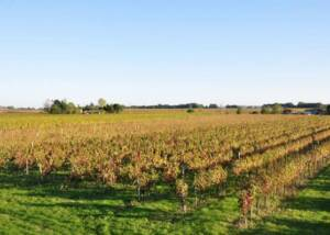 The Beautiful Vineyards of Domaine de Perreau