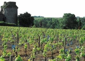 Chateau De La Vineyards