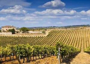 Beautiful Vineyards of Azienda Agricola Casale