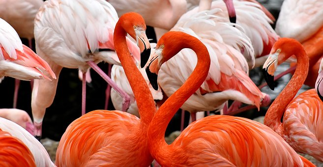 Flamingo, Vogel, Bunt, Farbenfroh