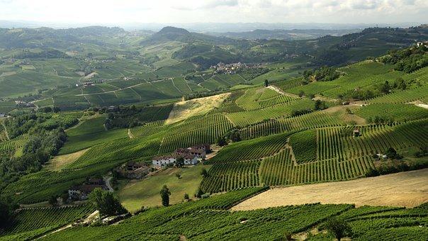 La Morra, Langhe, Italien, Wein, Trauben