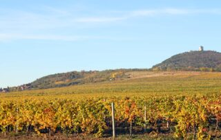 Vineyards close to Vršac in the Banat region
