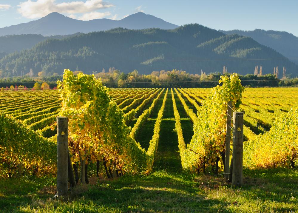 Vineyards in Marlborough wine region, New Zealand
