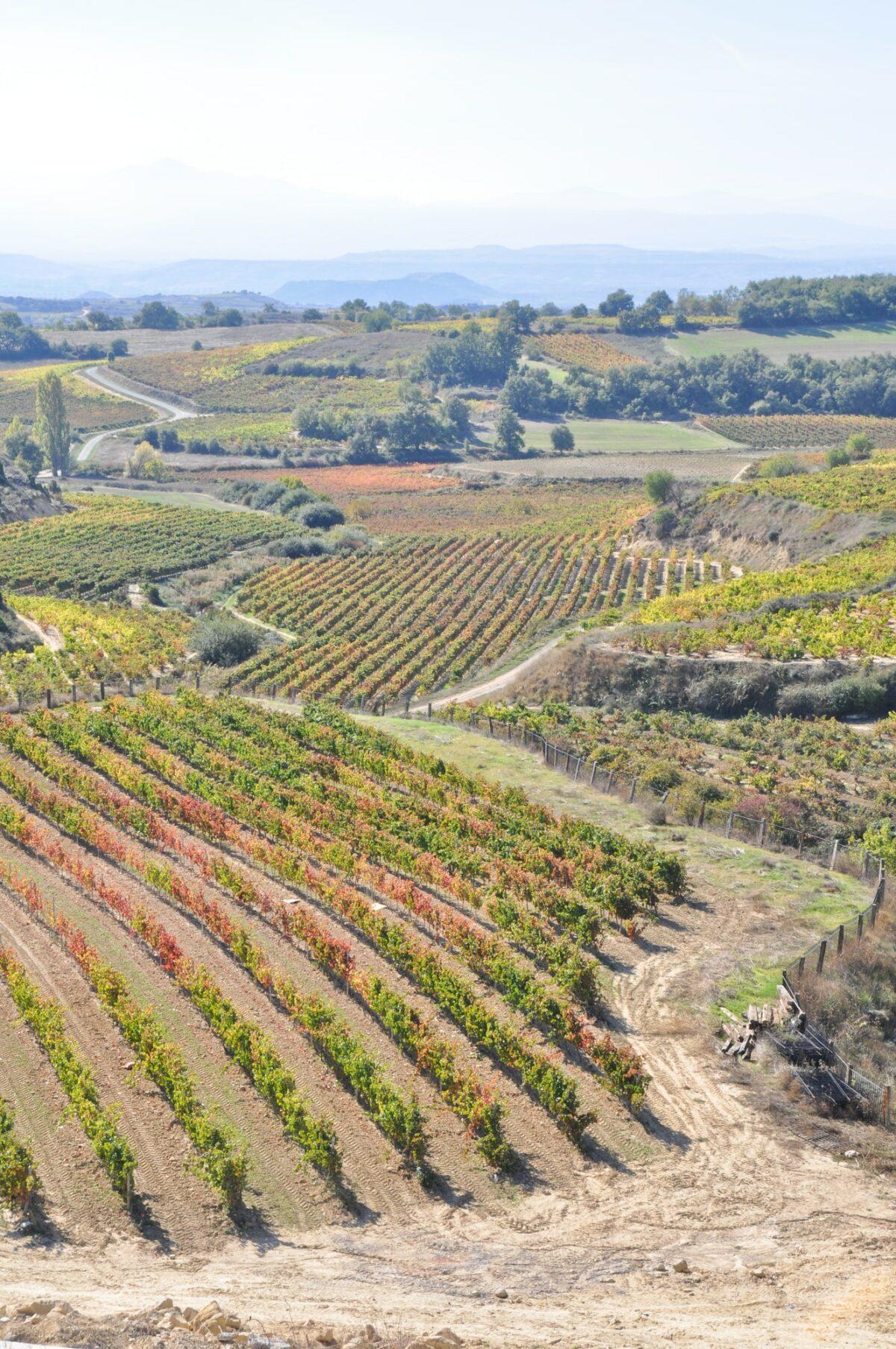 Vineyard landscape of Rioja Wine Region, Spain
