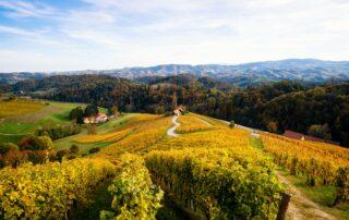 The vineyards of Spicnik in autumn