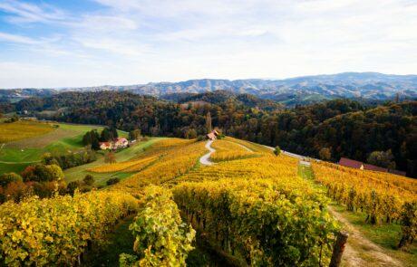 Podravska wine region