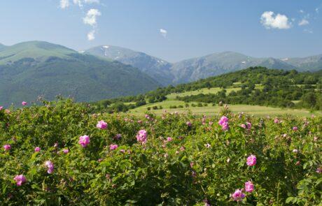 Valley of Roses wine region