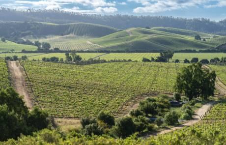 Casablanca wine region