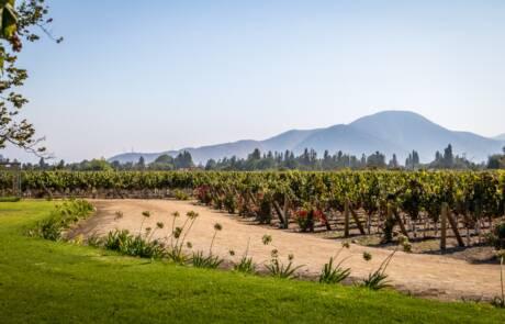 Aconcagua wine region
