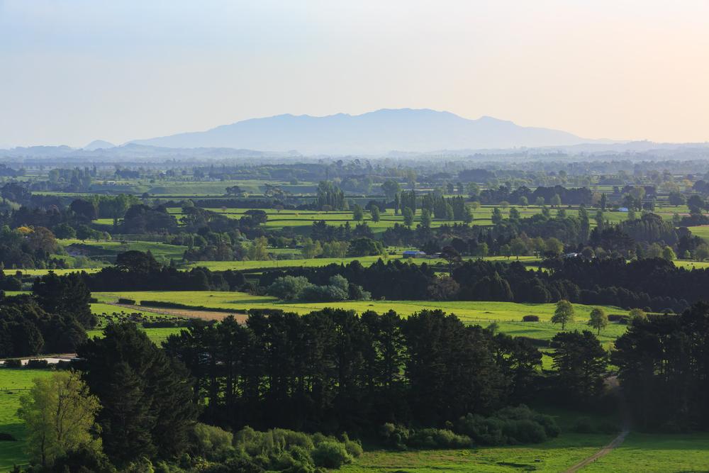 Landscapes of Waikato wine region, New Zealand