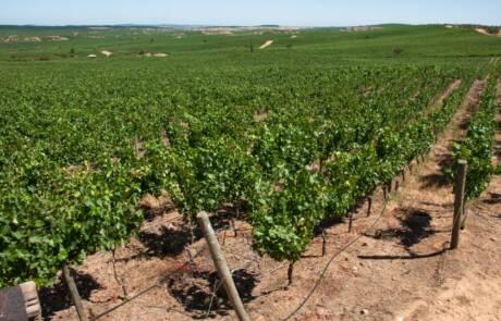Leyda Valley wine region