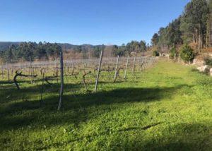 The vineyard of the Vinhos Norte winery