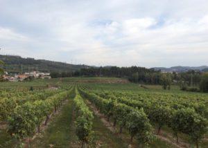 The view on the vineyard of Vinhos Norte