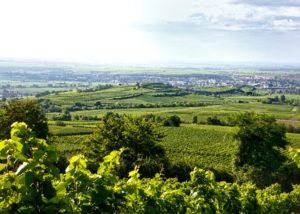 The vineyards under the sun at Weingut Hanewald-Schwerdt in Pfalz
