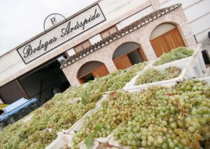 harvesting process near Aruspide winery in Spain