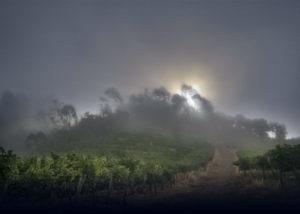 optima vineyard landscape during evening in united states