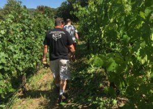 people walking through optima vineyard located in united states