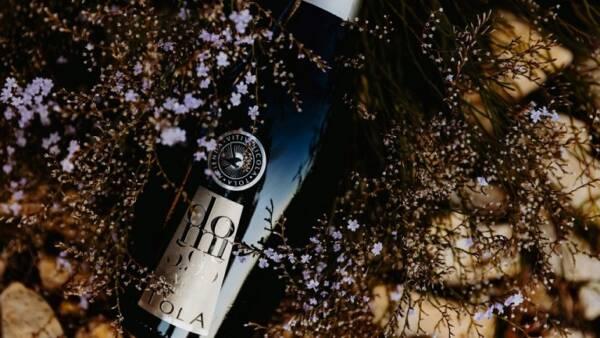 Beautiful Display of Azienda Vitivinicola Tola WIne Bottle