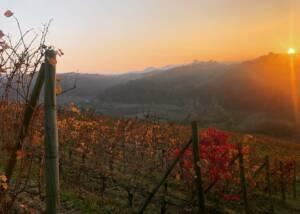 Vineyards of Ca Viola