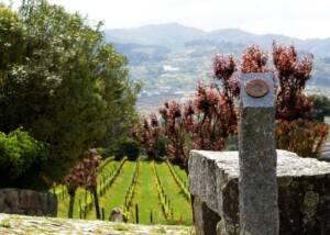 Vineyards of Quinta De Covela