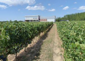 The vineyard and winery of the Bodega y Vinedos Martin Berdugo