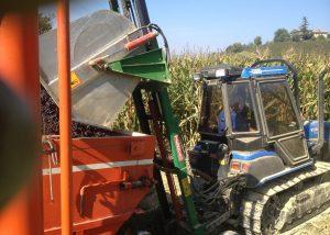 Mechanized grape harvesting process in Pavia Fratelli winery.