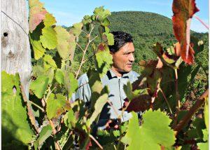 Tenuta Leonard winemaker works at vineyard in Italy