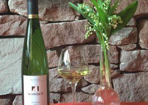 A white wine for tasting at Domaine Schwach François et Fils