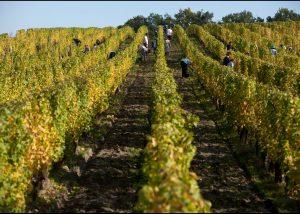 The vineyard with a blue sky at Château de Rayne Vigneau