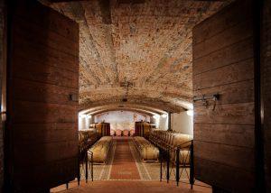 vineyard at Tenuta Villanova winery where you can have a walk