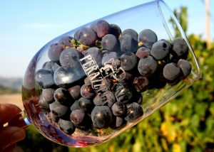 A glass filled with black grapes in the wonderful Perazzeta winery.