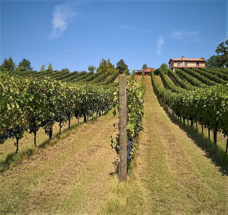 beautiful vineyard of Villaoppi winery located in Italy