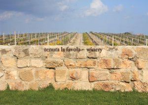 Tenuta La Favola vineyard view behind fence in Italy