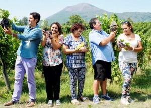 Sorrentino Vesuvio grapes in hands of visitors in Italy