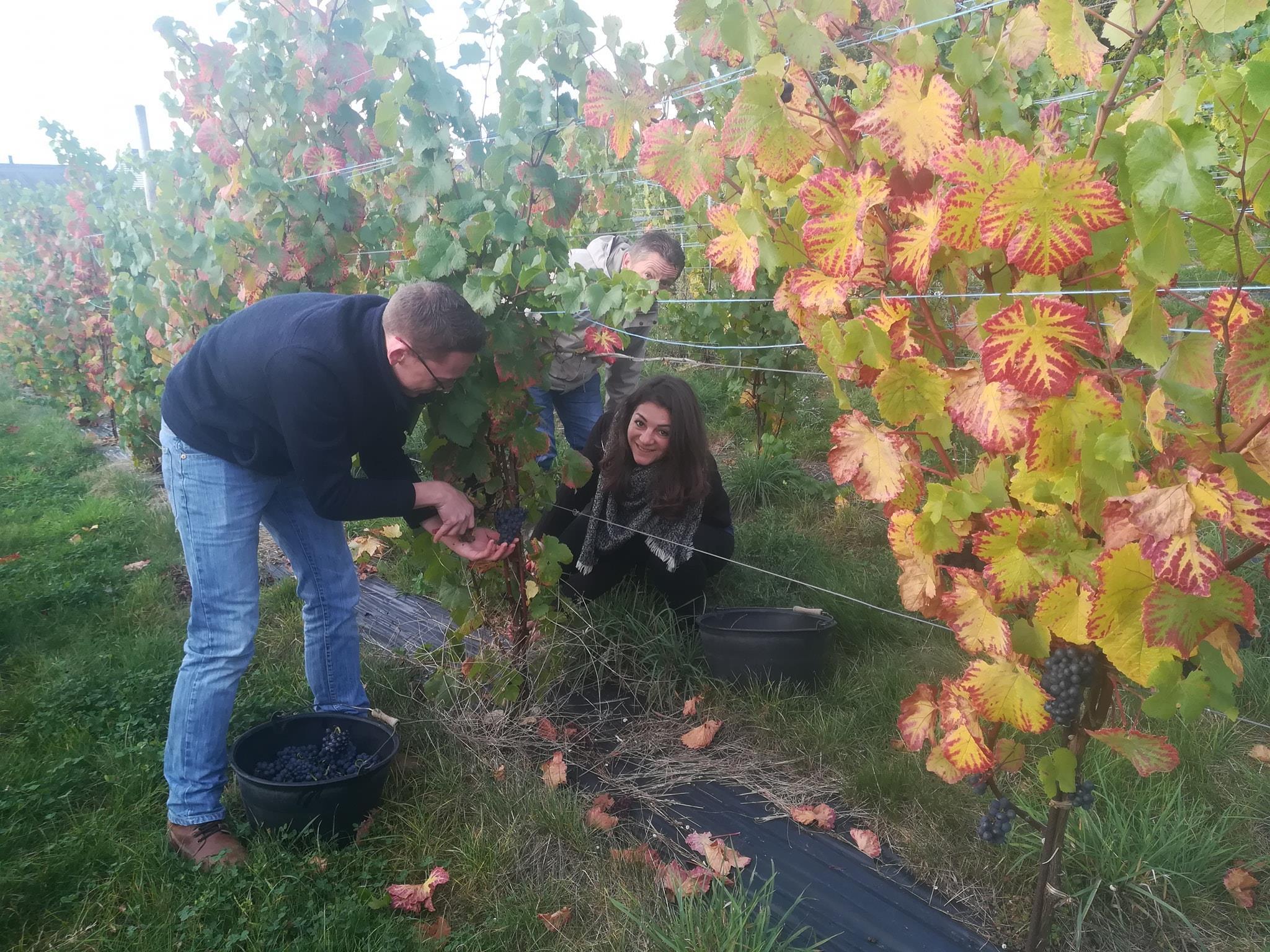 Arpents du Soleil - Taking care of vines