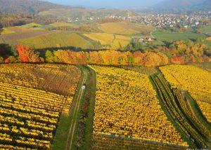 Vins Schoenheitz - beautiful picture of the vineyards