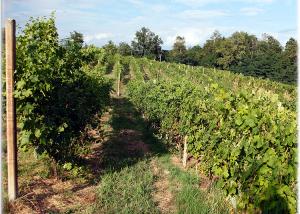 Società Agricola Roccia Rossa vineyard overview in Italy