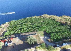 Tenuta Di Castellaro vineyard overview located in Italian island