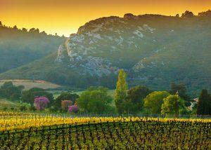 Ollieux Romanis - landscape vineyard