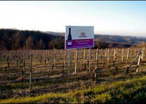 Viticoltori Associati di Vinchio Vaglio Serra vineyard view