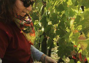 woman winemaker working at vineyard of Tenuta Santi Giacomo e Filippo