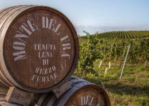 Huge wooden barrels for wine in the amazing monte del fra cellar.