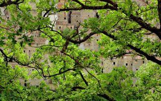 House in between trees in wine region Molise in Italy