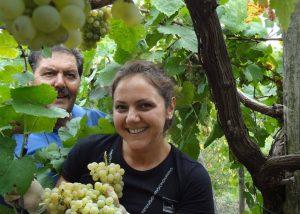 Sorrentino Vesuvio winemakers at vineyard during harvesting