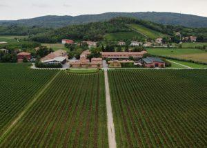 Tenuta Villanova winery cellar full of huge barrels with world-class wines